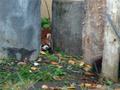 【旭川】「☆20周年記念☆婚活プロジェクト」 in旭山動物園