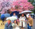 【新宿】ツア婚第5弾!春恋♪お花見ツアー婚[30〜45才]