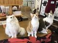 にゃんコン☆猫カフェ×恋活